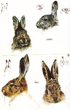 Rabbit And Hare Studies by the incredible Rien Poortvliet