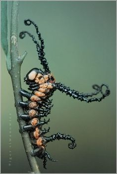 Wow! Insect Photographs By Igor Siwanowicz