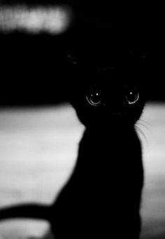 small, dark, & adorable.