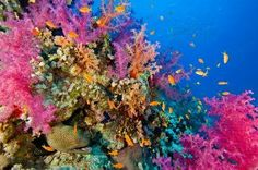 Great Barrier Reef | Sea Soiree Inspiration