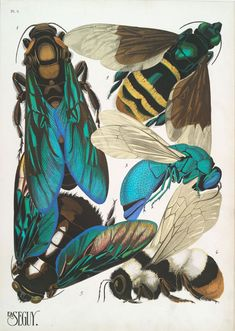 Insect Collages - weetstraw