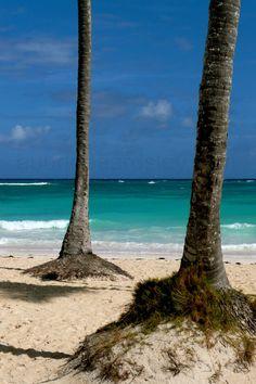 Punta Cana, Dominican Republic/Palm Trees/Clear Blue Water/Beach/Sand