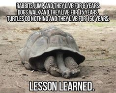 the secret of longevity But technically that is a tortoise.