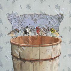 songbirds investigate