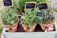 herb centerpiec, herbs garden