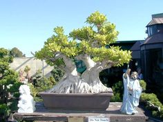 Image detail for -Bonsai Collection Page