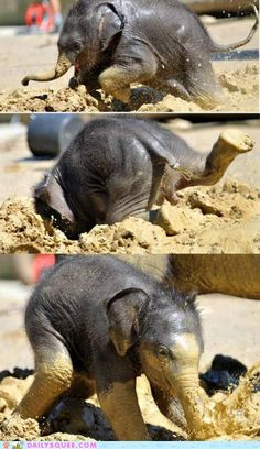 baby elephant at play