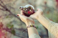 Decor Crush: Terrariums  http://blog.freepeople.com/2012/08/decor-crushterrariums/