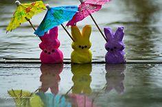 Peeps in the rain :)