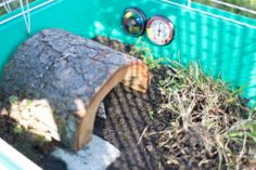 baby box turtle habitat >> new substrate