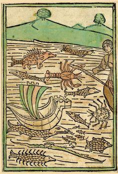"""from Cunrat von Megenberg, """"Buch der Natur"""", printed by J. Bämler, Augsburg. 1475, 1478, 1481 (via British Museum)"""