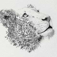 black and white lioness - Google Search