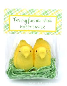 Easter Tweets for your Peeps! What a cute and simple gift idea for classmates or neighbors!