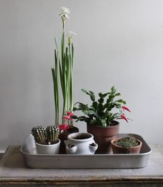 A vintage roasting pan is a smart way to corral a group of potted plants. #.iffygarden.com #Garden #Top_Garden #Garden_Ideas #smart_garden