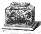 A Wardian Case or Terrarium.