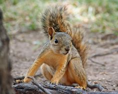 Hmmm, So You Want to Catch a Squirrel | Grow, Prepare, and Preserve Your Own Food and Medicine