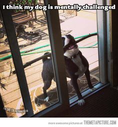 funny animals, funny pics, funny dogs, silly dogs, funni, sticks, door, funny photos, puppi