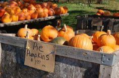 Pick pumpkins, pet exotic animals and even take a camel ride at Goebbert's Pumpkin Patch!