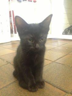 Little black kitty black kitti, nice thing, kitti heaven
