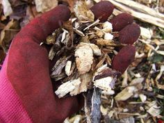 Which Mulch Should You Choose? Get Advice >> http://blog.diynetwork.com/maderemade/2013/04/18/how-to-shop-for-mulch/?soc=pinterest