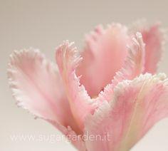 Sugar Tulip by SugarGarden...