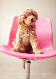 so cute. (the chair and the pup)
