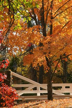 san diego, actual season, autumn, julian california, fall, place, julian san, apple orchard, apple pies