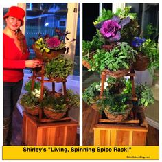 "You can make a vertical herb garden, a ""living spice rack"" that spins, using a repurposed tomato cage!"