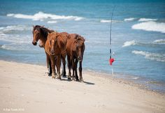 It's Friday and we're going fishing. Who else is ready for a #beach #vacation? ~ Photo by Eve Turek
