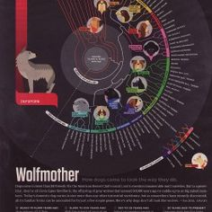 Wolfmother How Dogs Came to Look the Way They Do #dogs #wolves #dog #wolf