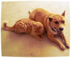 Get the right supplies into your Pet's First Aid Kit #beprepared #DIY