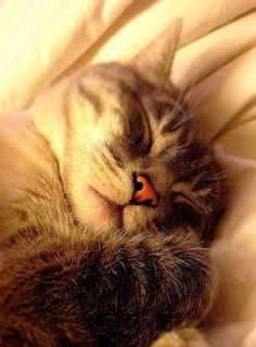 """Cats are connoisseurs of comfort."" --James Herriot"