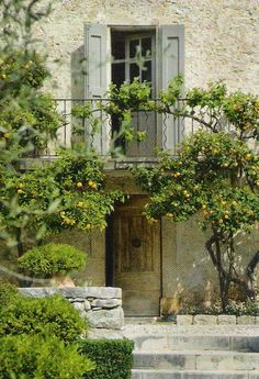 Love the lemon trees. Paint the shutters blue and it'll be perfect.