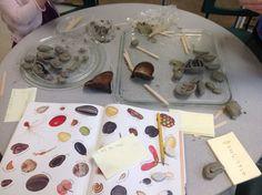 Using clay to create various seeds! http://www.wondersinkindergarten.blogspot.ca/ clay, seed