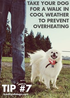 Take your dog for a walk in cool weather to prevent overheating. #happy #dog www.koolcollar4dogs.com
