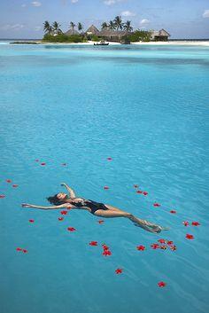 Maldives beaches, heaven, dream, the ocean, sea, islands, island life, place, rose petals