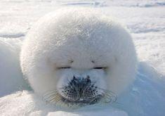 Wildlife photographer snaps a smiling seal pup | News.com.au