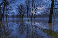 """Louisiana Blue swamp"" by George Saad"