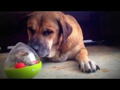 The new Wobble Ball Enrichment Toy from P.L.A.Y. is intellectually stimulating for your dog and offers hours of fun. View P.L.A.Y.'s complete product line today.