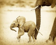 Vintage SAFARI BABY ANIMALS