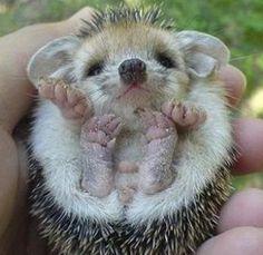 A Cute Baby Hedgehog