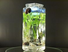 Designbuzz : Design ideas and concepts » Self-cleaning NoClean Aquariums are home to Betta Fish
