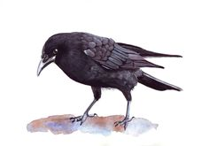 Crow+painting++bird+print+of+watercolor+painting++by+Splodgepodge,+$15.00