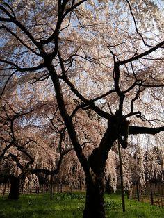 ✮ Loveliness of Spring