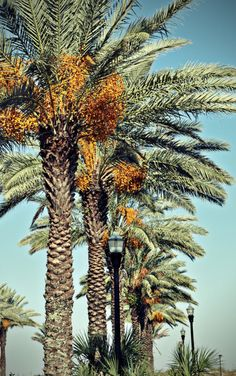 #ridecolorfully palms and lamps