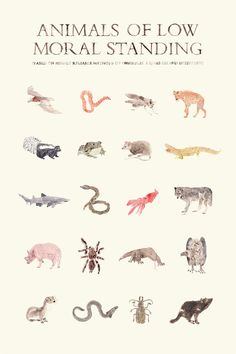 Animals of Low Moral Standing Print by AnimaliaShop on Etsy, $29.00