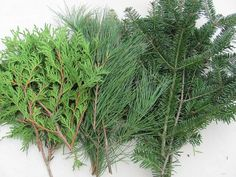 Wreaths For Door - #DIY #HolidayGreens Fresh Maine Mix #Balsam Pine Cedar 10lbs, $38.99 (http://www.wreathsfordoor.com/diy-holiday-greens-fresh-maine-mix-balsam-pine-cedar-10lbs/)