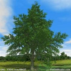 download tree 3d max free
