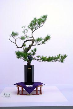 Ikebana - Ensyu style