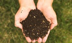 Fertilizers From Your Trash (That Your Plants Will Love)